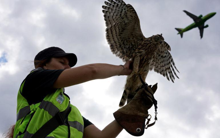 Орнитологи в аэропорту