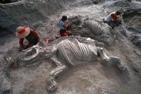 Палеонтолог