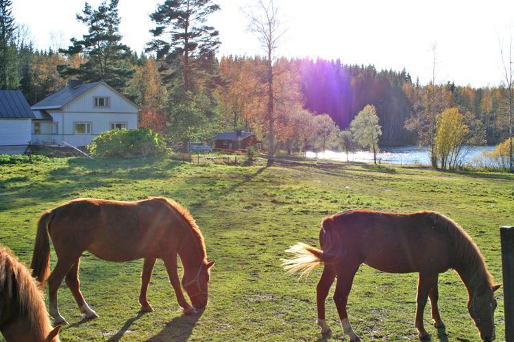 Сельское хозяйство Финляндии. Как живет финский фермер