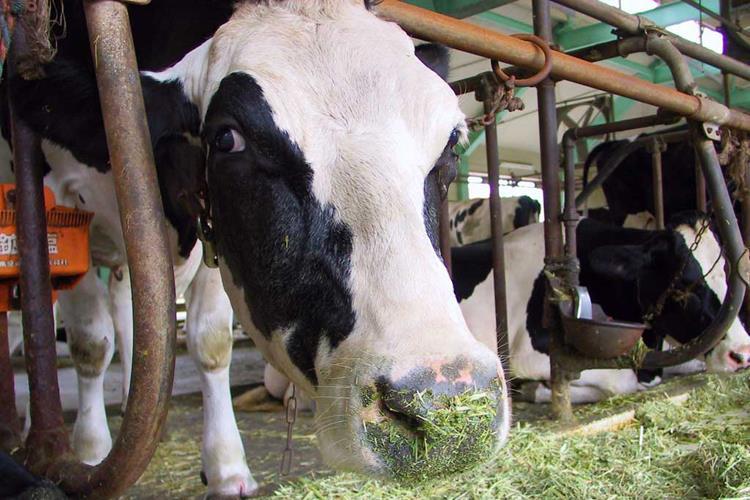 На ферме в Финляндии