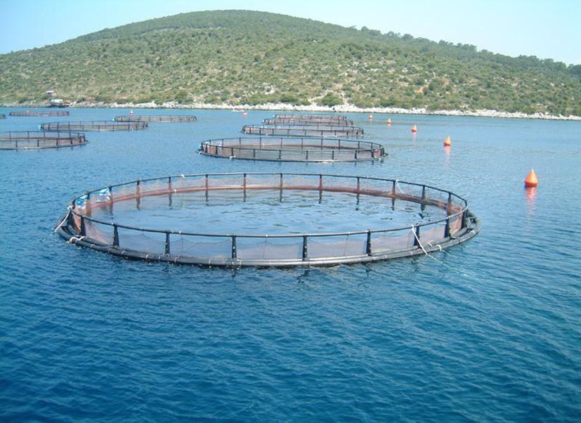 Обработка водных биоресурсов