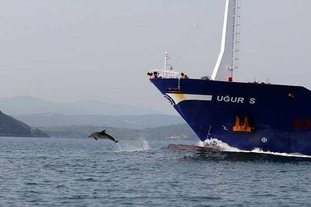 Дельфин-лоцман
