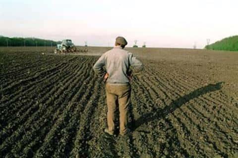 Чаще всего оказывается, что землю сельхозназначения переводят в другой вид, пригодный для застройки