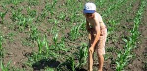 эксплуатация детского труда статья ук рф