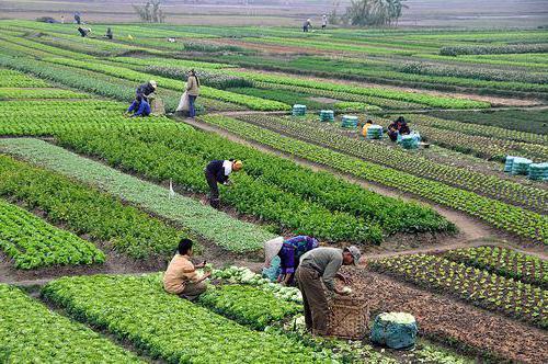 Технолог сельскохозяйственного производства