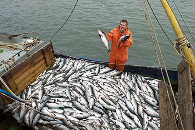 Промысловая рыбная ловля
