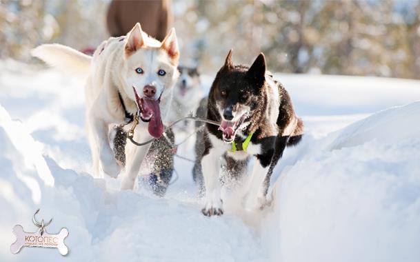 профессии собак 2