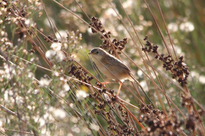 орнитология наука о птицах