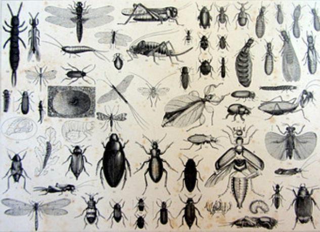 энтомология наука о насекомых